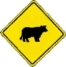 beware of cattle on road warning sign